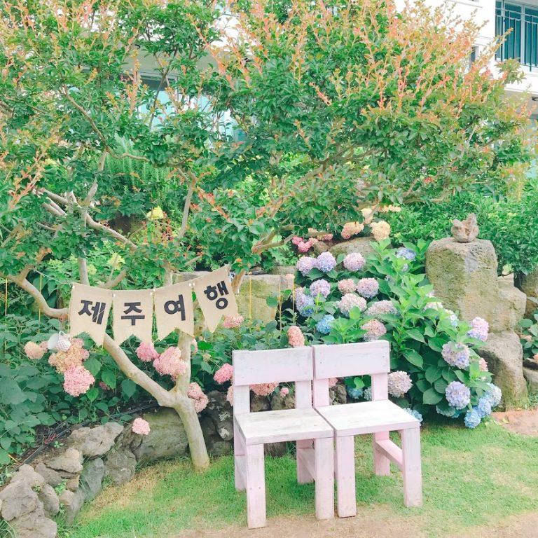 【TRIP】済州島のお花畑カフェ♡Cafe Cafe Manor Blancをご紹介!